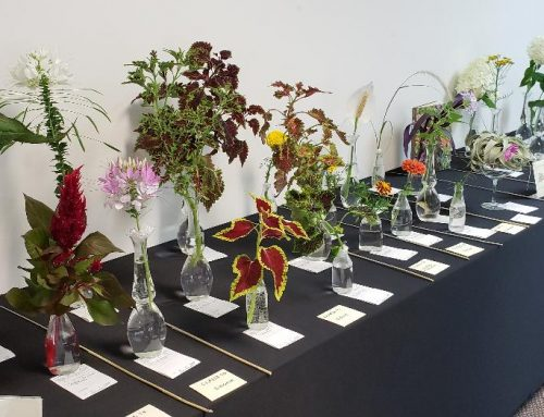 NGC HORTICULTURE SPECIALTY FLOWER SHOW